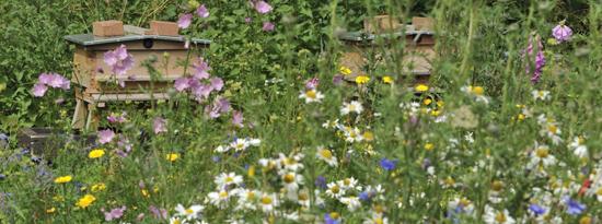 Opleiding van tuin tot landschap een ecologische visie for Opleiding tuin