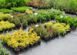 Taux de TVA sur la vente de plantes
